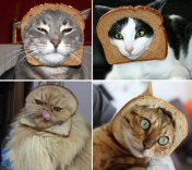 breading_cats_gallery