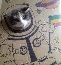Gato Cartoon 2